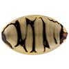 Murano Glass Bead Giglio Flat Oval 30mm Topaz and Black