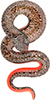 Red and Salmon Dichroic Lampwork Snake Pendant Authentic Murano Glass 75mm